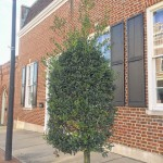 Expert: Little hope for Uptown trees to grow