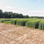 Small Grains Field Day slated next Tuesday in Peachland